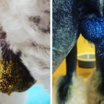 dog balls glitter, glitter on balls, ball glitter dogs