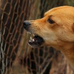 Aggressive dogs, treating aggressive dogs, behavioural problems in dogs, aggressive dog breeds, dog behaviour training