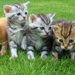 World spay day, spaying cats, neutering cats, spaying dogs, neutering dogs, dog spaying myths