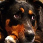 animal abuse US, US laws animal abuse, federal crime animal abuse, animal abuse bill