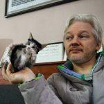 Embassy cat, Julian Assange, NewsOnPets, cats, petnews, news ,pets, United Kingdom, Ecuador