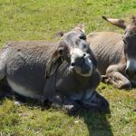 Donkeys, Pets, Easter, NewsOnPets