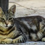 Cats, Cats Overpopulation, societal nuisance, NewsOnPets