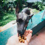 Stray Feeding, strays, animals, pets, NewsOnPets, Mumbai