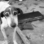 Dog rape, dog rape Chennai. Dog rape cases india