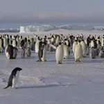 Penguins, Disneynature, NewsOnPets, Documentary, Review
