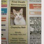 NewsOnPets, Cat Obituary, Social Media