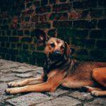 NewsOnPets, stray dog assault, pet news