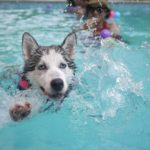 NewsOnPets, Pet Home Boarding, Pool Party for pets
