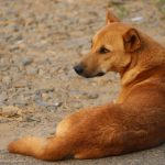 NewsOnPets, Anti rabies, vaccination, sterilization, stray dogs, Welfare for Stray Dogs