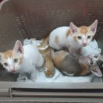 NewsOnPets, Dodo, Rescued Pets