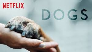 Netflix Originals - Dogs